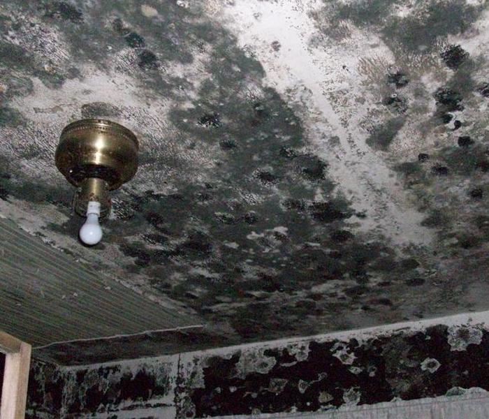 Heavy Mold Growth- Fernandina Beach, FL