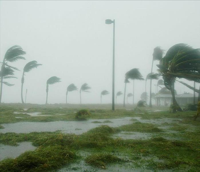Palm trees blowing in hurricane force winds