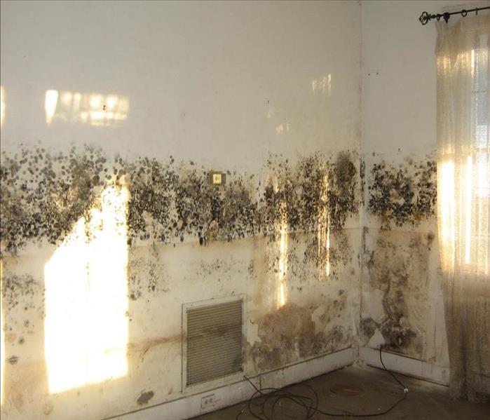 Mold Remediation A Major Key to Mold Remediation is Humidity Control