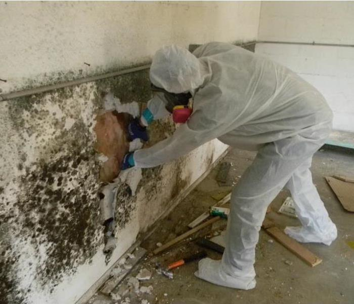 Mold Remediation Mold Prevention Tips & Information